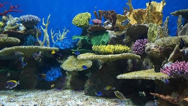 aquario-fw
